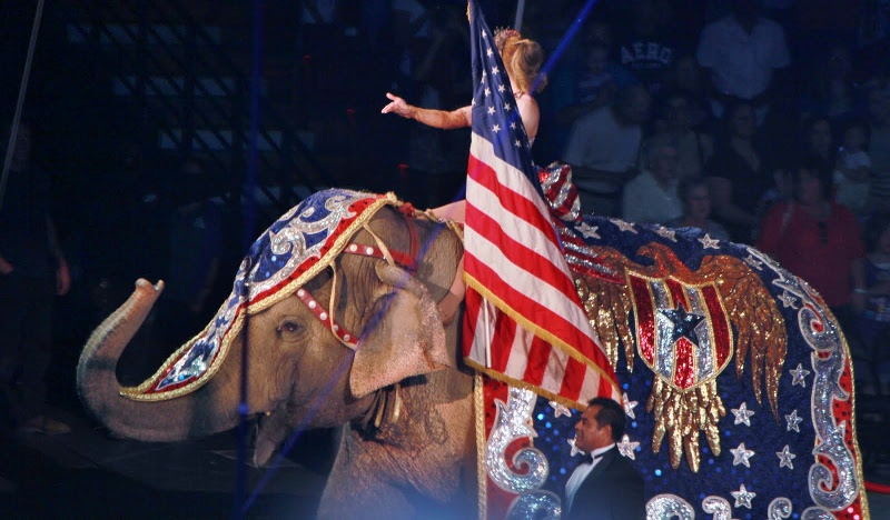 Circus elephant in American flag themed costume.