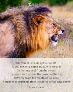 Bible meme quoting Psalm 22:19-21 with male lion walking about to roar